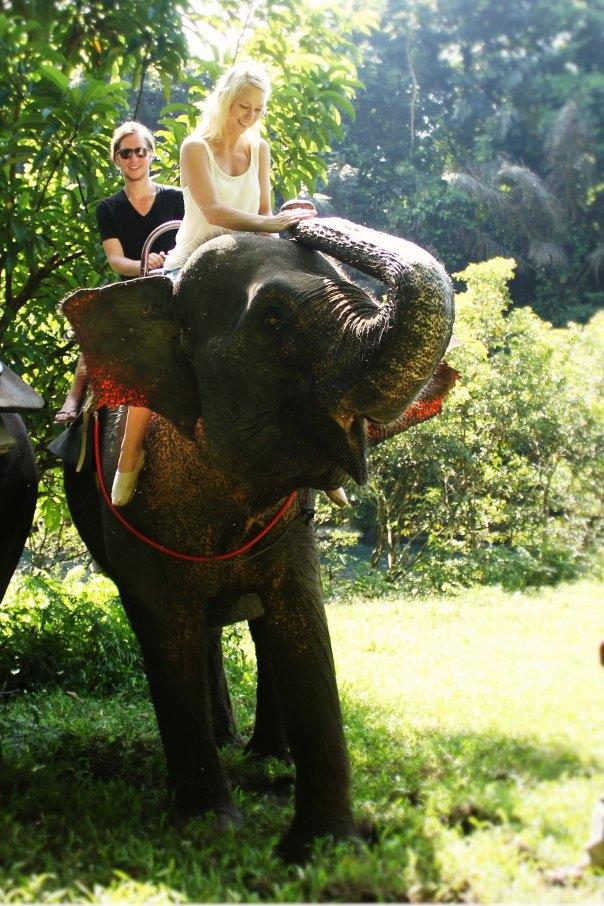 Wij op olifant